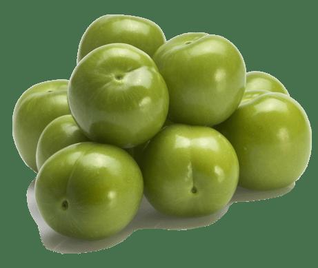 درخت گوجه سبز سردری