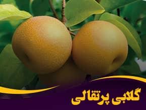 گلابی پرتقالی