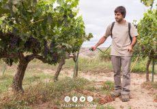 برای باغ انگور به چه کودهایی نیاز داریم؟