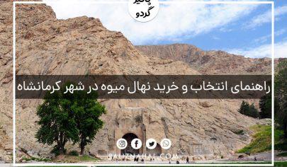 خرید و فروش انواع نهال میوه شناسنامه دار جهادکشاورزی در کرمانشاه