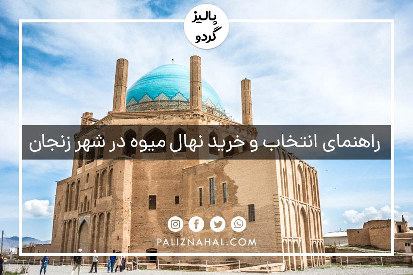 خرید و فروش عمده نهال میوه شناسنامه دار جهادکشاورزی در زنجان